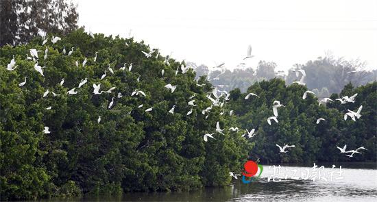 """央视点赞:湛江红树林是""""生物多样性宝库"""""""