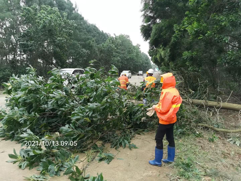 风中显担当!湛江公路人奋战台风一线保安全畅通